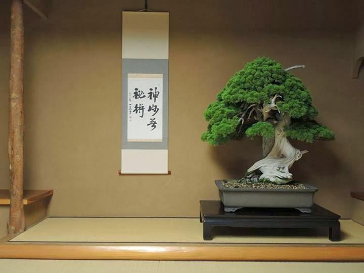 O Bonsai de Shunka-en: 800 anos de vida